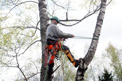 KLATRER: Håvard Knivestøen (40) fra Skotselv er profesjonell trefeller og klatrer gjerne i «vanskelige» trær.