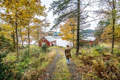 BLE REGULERT BORT: Like før jul i 2017 bestemte flertallet i kommunestyret at hele Kaupanes-området, inkludert fritidseiendommene i Fiskarvik, skulle settes av til industri. Hytteeierne ønsker nå å få eiendommene sine innløst. Bildet er fra eiendommen som ble beplantet av Feyling-familien for drøyt 100 år siden.