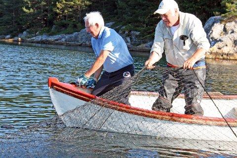 KAN RISIKERE STENGT: Kilenotfiske i sjøen kan bli stengt i fem år. Her er Norvald Myklebust og norskamerikanske Ludvig Myklebust på kilenotfiske.