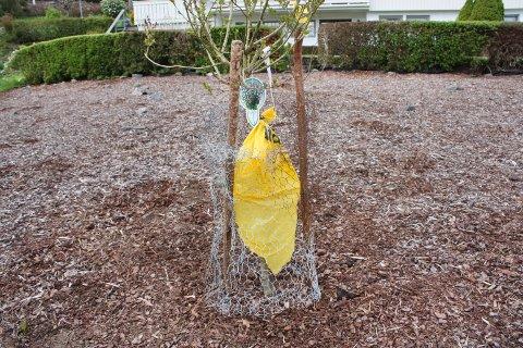 Prydbusker får ikke stå i fred i Sokndal.
