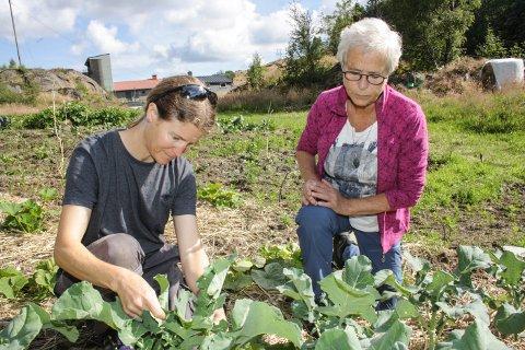 VEKS GODT: Brokkolien til Leah Horwood (t.v.) er snart klar til innhausting. Både ho og Anne Sandtveit er rutinerte grønsaksdyrkarar.