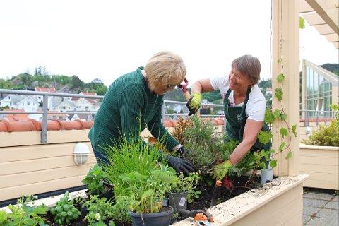 GRØNN GLEDE: Alise Ege og Torhild Kielland stortives med hagestell og planting. De synes det er helt naturlig å bidra litt ved Lundeåne bo- og servicesenter, når de tross alt får avholde møtene sine der.