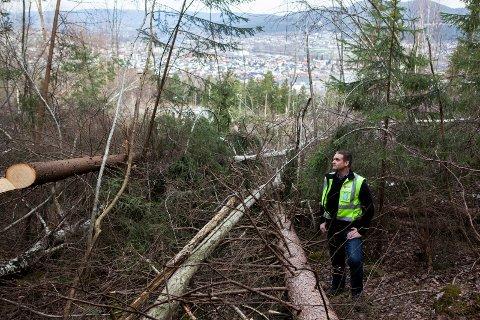 OPPGITT: – Jeg har aldri sett maken til grov selvtekt, sa eiendomssjef i Nedre Eiker Erik Mathiassen til Drammens Tidende da den ulovlige hogsten ble kjent.