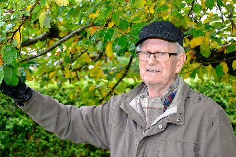 87 år gamle Kjell Knudsen, som bor i Åsen i Mjøndalen, er sjokkert over at noen har robbet hele avlingen på epletreet hans.