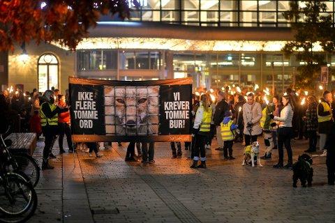 SLAGORD: «Ikke flere tomme ord, vi vil ha tomme bur», ropte deltakerne i fakkeltog mot pels i Drammen i oktober.