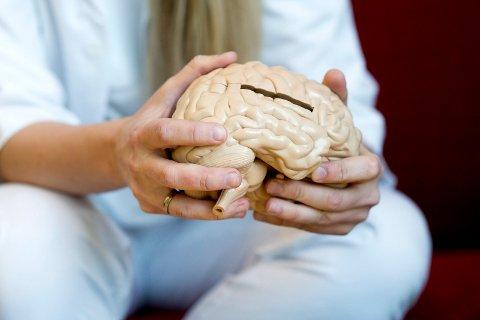 HJERNEN: Fram til du er rundt 20 år gammel er ikke impulskontrollen i hjernen ferdig. Den mangler noe - og dette påvirkes av cannabis.