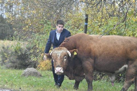 Eier Henrik Fosslien (26) måtte rykke ut i full dress for å hente oksen Brumle.