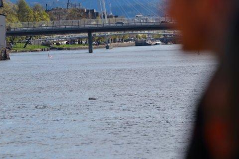 Rester fra bilen fløt opp etter at den sank i Drammenselva.
