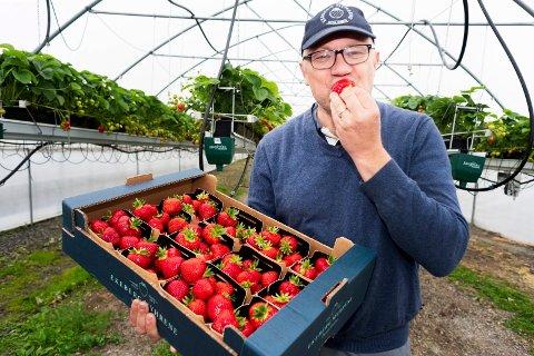 FØRST UT: Jordbærbonde Simen Myhrene i Sylling er klar med sesongens første jordbær.