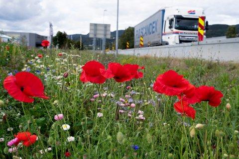 Blomsterenga er egentlig en flomvoll som er en del av flomsikringa av Mjøndalen.