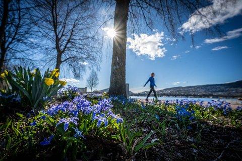 Drammen 15. april 2020. Mye kunne vært bedre, men været må sies å være så bra som det er mulig å få det.