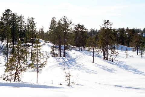 SKIFØRE: Det er nykjørte skiløyper på Holtefjell.