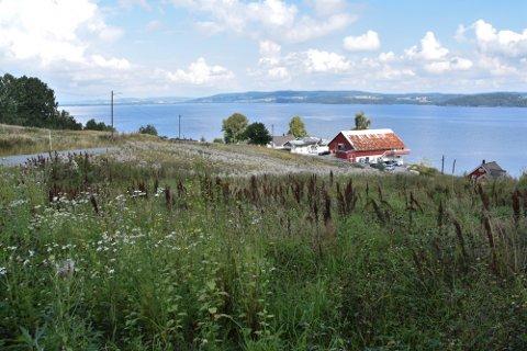 Øyerenveien på Flateby, hvor hundejordet er ønsket etablert på åtte dekar.