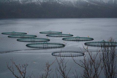 MER FISK: SalMar Farming søker om å etablere et nytt oppdrettsanlegg i Lebesby kommune (illustrasjonsbilde)