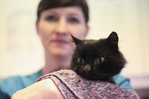 PUS utan hus: Denne eigarlause katten er blant mange Hanne Husebø Kristensen og Flora Dyreklinikk har teke imot den siste tida. Foto: David E. Antonsen