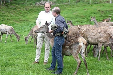 Landbruks- og matminister Jon Georg Dale besøkte Svanøy måndag, der han fekk ei innføring i hjortebøndene sine utfordringar, samt eit innblikk i havbruksnæringa som blir drive rundt øya. Her i samtale med Johan T. Solheim.