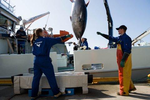 Bluefin leverer makrellstørje.