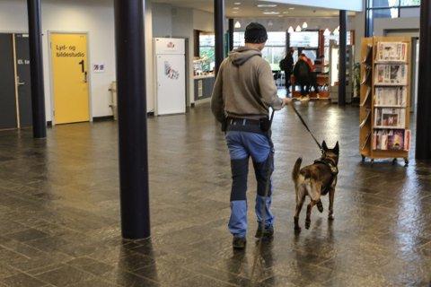PÅ SØK: Politihunden «Odin» er norges beste politihund. Her er den i aksjon på Flora vidaregåande skule.