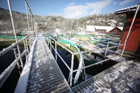 Barlindbotn Settefisk: For å unngå at 1,6 millionar smolt døydde, valde Barlindbotn Settefisk å tappe meir vatn frå Jagedalsvatnet enn dei hadde lov til. No hamnar saka i retten.