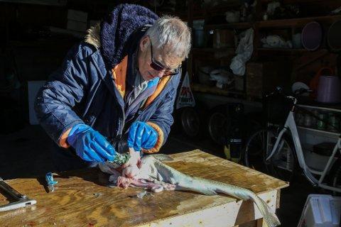 Da Egil Strømmen begynte å sløye torsken, fikk han seg en støkk.