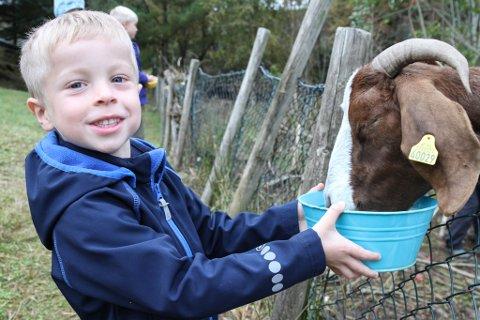 Havreneset barnehage har gått saman med naboar om å halde geiter som beiter ned kommunal grunn rundt barnehagen. Fem år gamle Emil Kessler trivast godt i rolla som geitebonde.