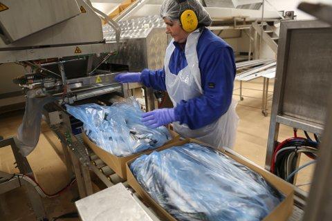 Produksjon og pakking av makrell på Global Fish Florø. Arkivfoto.