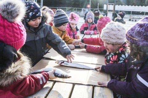 FULLE BARNEHAGAR: Barnehagane i kommunen er fulle, seier Runa Nybakk. Her er barn i Sørstrand  i sving med å flekke sild.