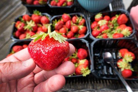 Jordbær. Foto: Gorm Kallestad / NTB scanpix
