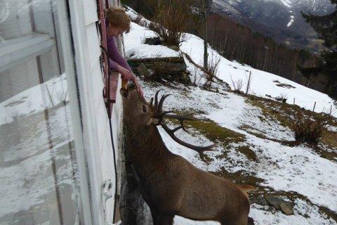 Metta Kvam får Flippen inn gjennom vindauget.