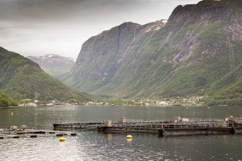 STRAUMAR: I lange periodar virvla det lus innover Sognefjorden grunna uheldige vasstraumar. Dette er truleg årsaka til at mykje av laksesmolten i elvane døydde i 2017. Dette anlegget ligg i Vadheim.