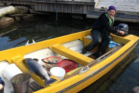 Sægrov på veg inn til land med rekordfisken.