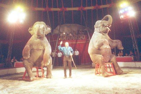 Vil nekte dette: Dersom eit sirkus brukar ville dyr til underhaldning vil Marius Dalin nekte dei å leige kommunal grunn i Førde.