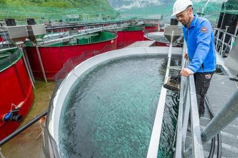 OVERSKOT: Osland Havbruk fekk eit overskot på nesten 130 millionar i 2017. Her er Kjetil Rørtveit som er dagleg leiar på Sørebø settefiskeanlegg, som er eit eige selskap under Osland havbruk.