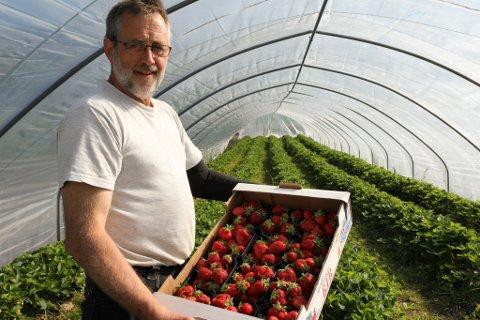 ALDRI FØR: Stein Hauge har 20 års fartstid som jordbærdyrkar, men har aldri hausta bær så tidleg.