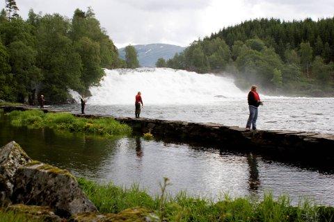 OSFOSSEN: Elvestrekket på nordsida av Osfossen er ein populær stad for laksefiske. I sommar fekk også 30 ungdommar prøve seg der under «Camp Villaks».