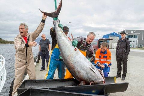 EKSKLUSIVT: Mannskap på båten Hillersøy lossar makrellstørje i Florø etter fangst under størjefiske i 2016. I 2019 får endå fleire båtar drive størjefiske, men dei må søkje om løyve.