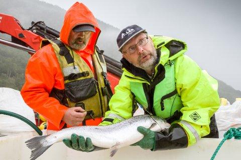 FORSKAR PÅ FÔR: Aller Aqua AS og Nordfjord Forsøksstasjon driv eit FoU-anlegg (Forsking og Utvikling) i Vadheimsfjorden. Dei har utvikla eit fôr som skal styrke fiskens motstandskraft mot lakselus, og dermed reduserer behovet bruk av tradisjonelle lusemiddel. Frå venstre Rolv Magne Tveit, og Sturle Skeidsvoll (dagleg leiar i Aller Aqua AS).