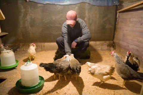 FRÅ HANDA: Larsen har 13 høns frå før, som sørgar for egg som naboar kan komme å plukke opp frå eit kjøleskap på fjøsen.