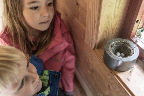 Linerla laga reir og la egg inne ein teiprull på utedoen til Vieåsen barnehage.