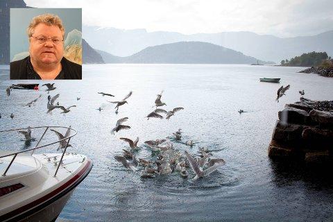 GEOLOGI OG ØKOLOGI: Professor Pål A. Olsvik skal elie eit stort miljøprosjekt om potensielle effektar av gruvedrift. Her frå Førdefjorden.