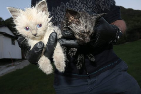 DUMPA: Biletet er teke under overlevering frå turgåaren som fann kattungane og til Ove Myrmel. Den svarte kattungen såg ut til at den ikkje ville overleve natta.