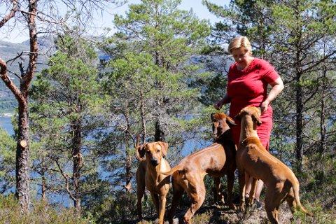 HELDIGE: Dei tre hundane til Heidi Rimmen deler uteområdet sitt med hundar som reiser langvegsfrå for å få fri frå bandtvangen. Matmor passar på at det aldri er så mange bestillingar at ikkje dei også får nyte dei 45 måla med inngjerda terreng fleire gongar for dag.