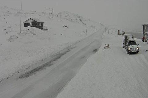 SNØ: Bidle frå fylkesveg 55 ved Sognefjellshytta 1400 meter over havet, klokka 09.24 torsdag morgon.