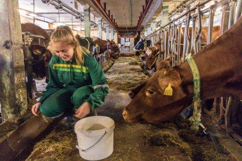SNART SLUTT: Sofie Årdal(17) frå Årdalen i Jølster synest det er leit at mjølkekvoten er seld. Ho har hatt stor glede av å vekse opp på ein gard og kjem til å sakne dyra