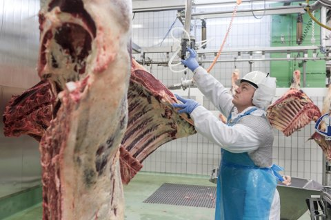 KJØTPRODUKSJON: Nortura kjem frå neste år ikkje til å skjere ned storfe i Førde, men selje slakta heile.