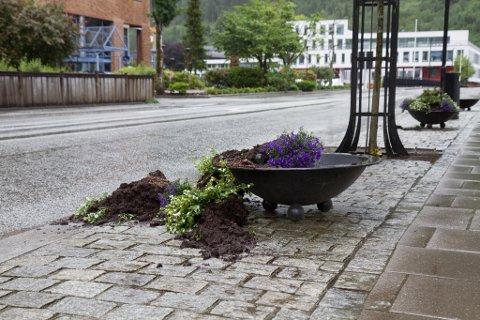STRØDD UTOVER: Jord og planter er velta ut frå pottene.