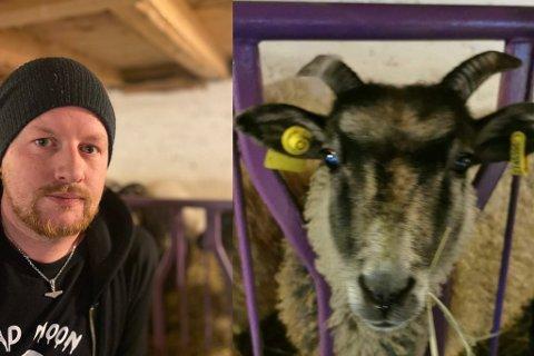 "LAGAR BESØKSGARD: Bonden Idar Kristian Gjervik fann sauen ""Greta"" drepen av ulv."