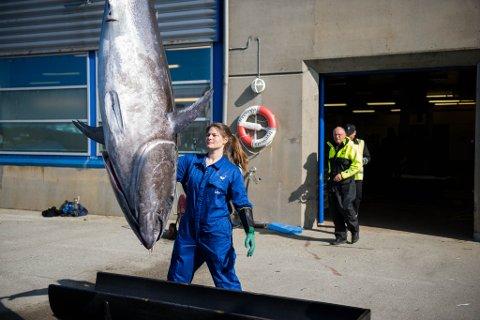«Bluefin» og skipper Atle Nekkøy er klar for nye eventyr med størjenota.