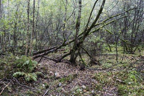 HAFSTAD: Det gamle bilvraket som stod i skogen er no fjerna, slik kommunen kravde. Litt glasbrot og ei list er alt som er att frå folkevognsbobla som har stått parkert der i fleire tiår.