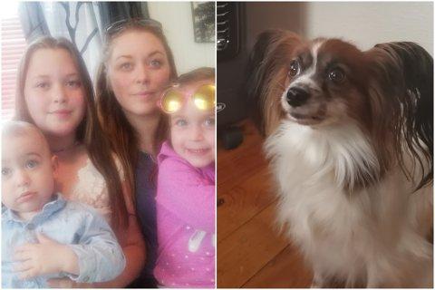 VARMEKJÆR: Milli er ein fem år gammal Papillon-hund som er glad i varme. Torsdag gjekk det gale.
